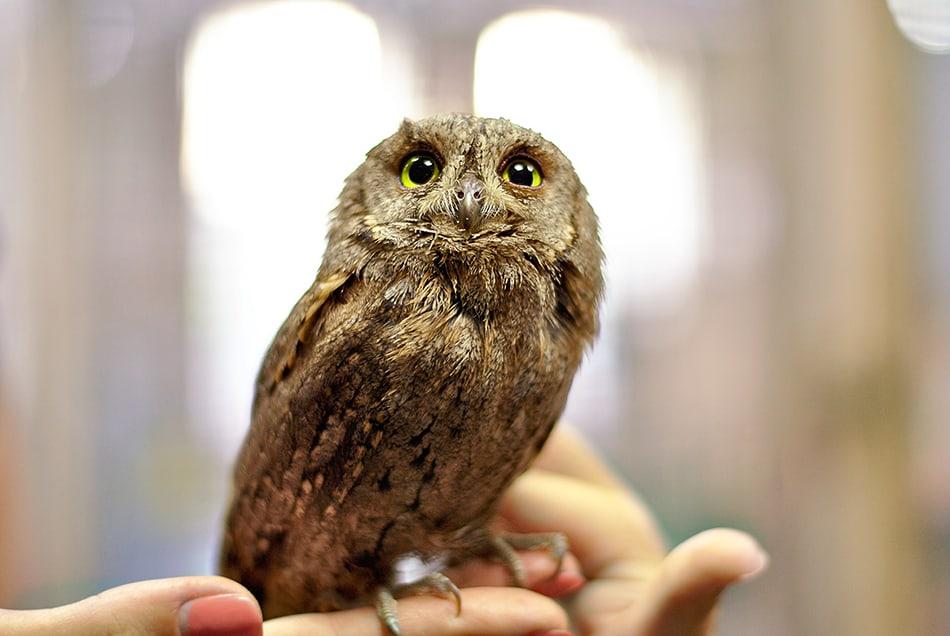Holding an Owl