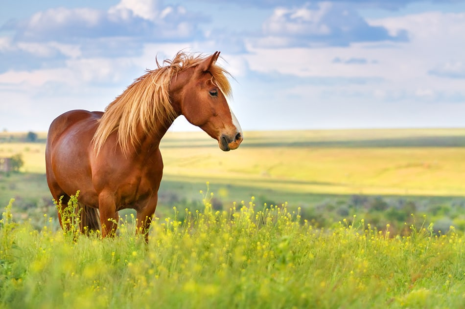 Horse Dream Meaning and Interpretation