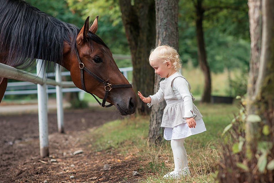 Talking to a Horse