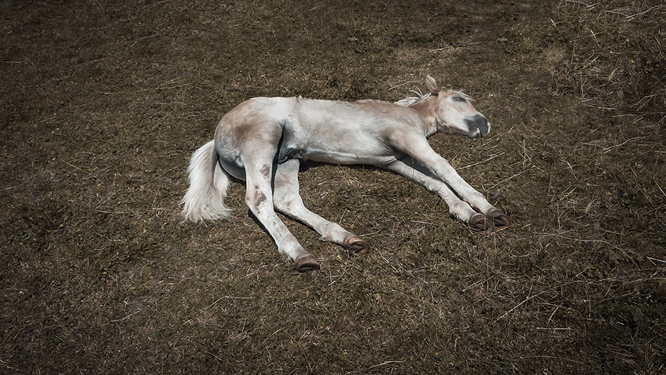 a Dying Horse