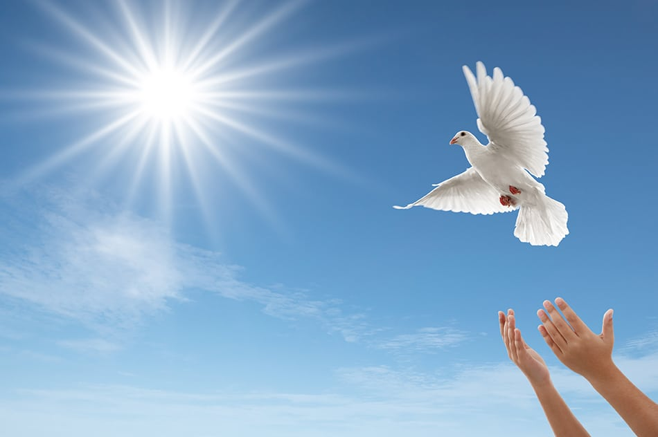 doves or pigeons being released into the air
