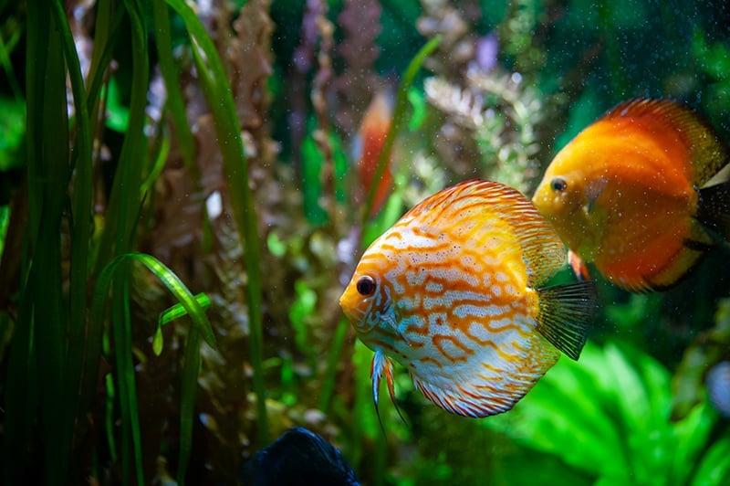 Fish Dream - Meaning and Interpretation