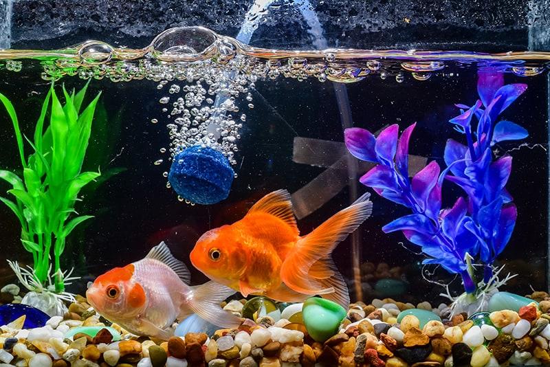 Dreams About Fish in an Aquarium
