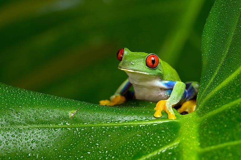 Frog Dream Interpretation