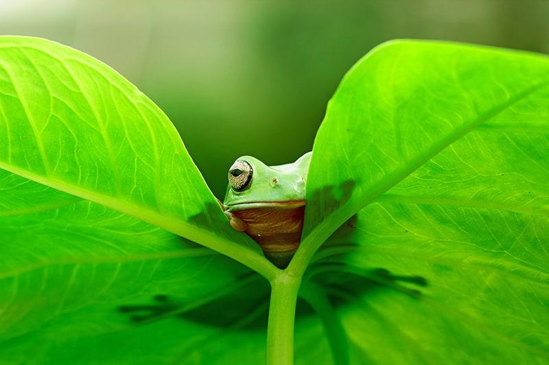 Dreams about a frog hiding
