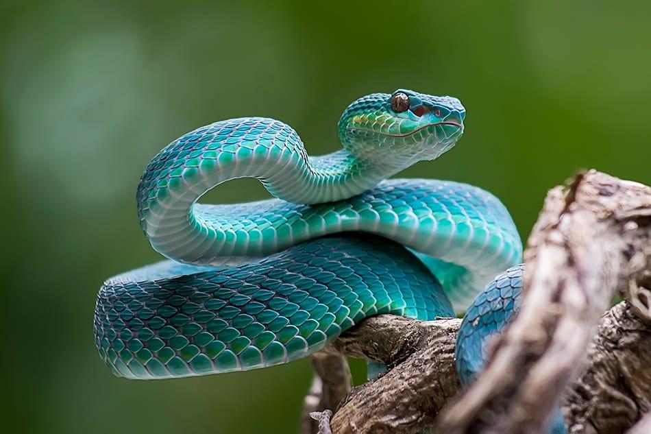 Snake Dream Interpretation