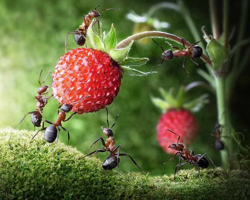 Ant Dream