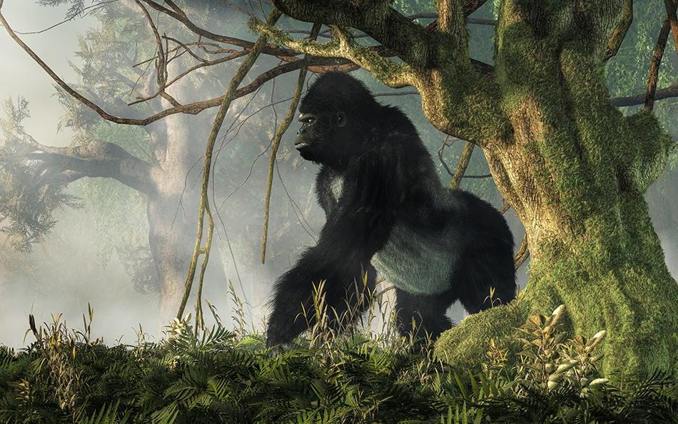 Ape & Gorilla