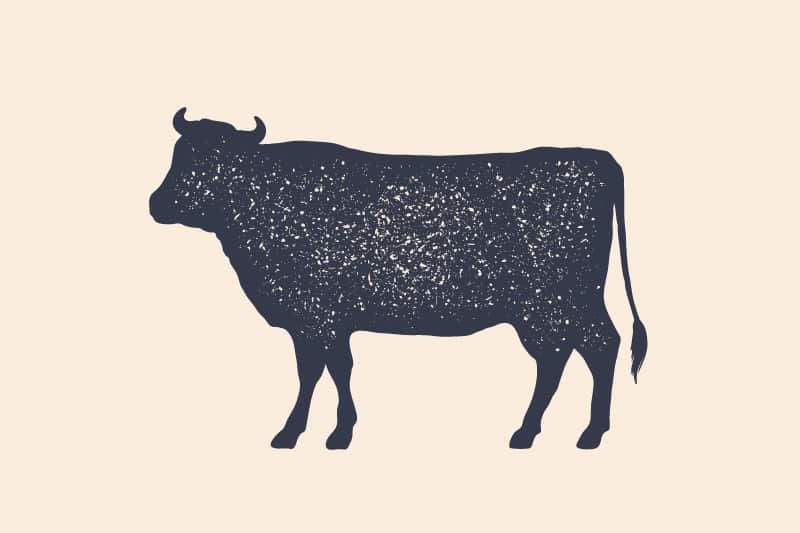 Cows and Cattle Symbolism