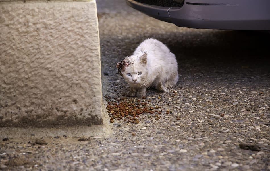 an abused cat/kitten