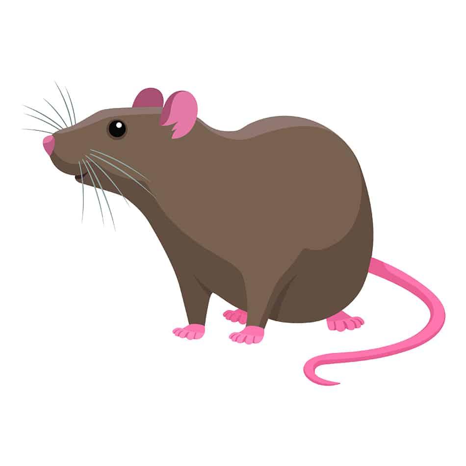 Rats Symbolize