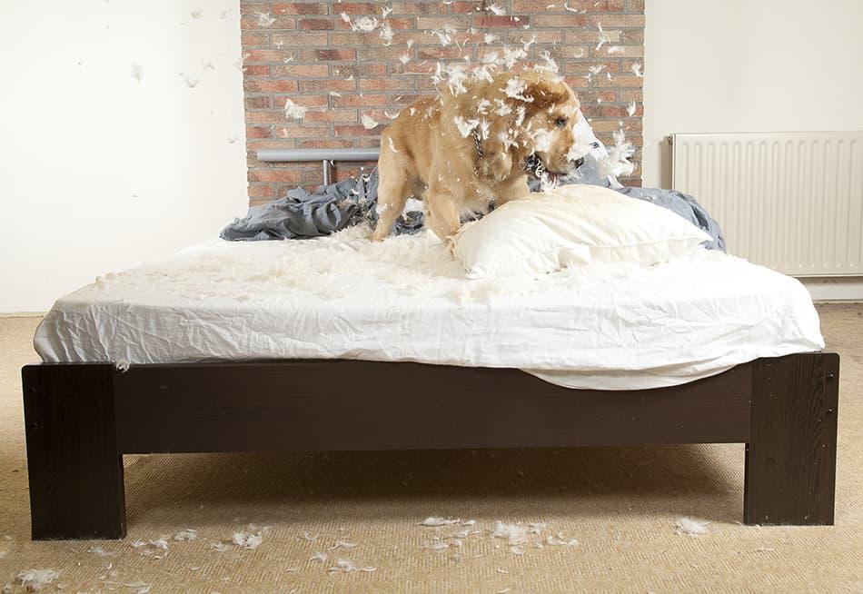 a dog destroying property