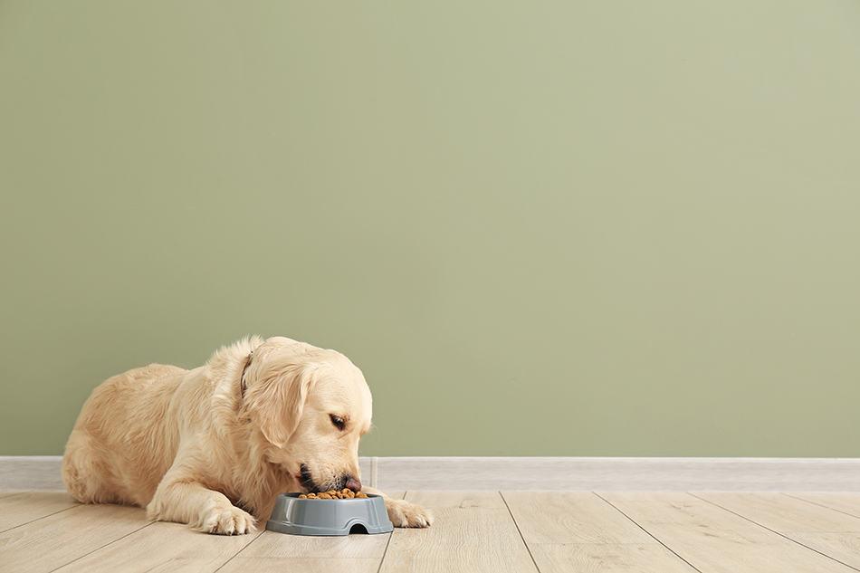 a dog eating