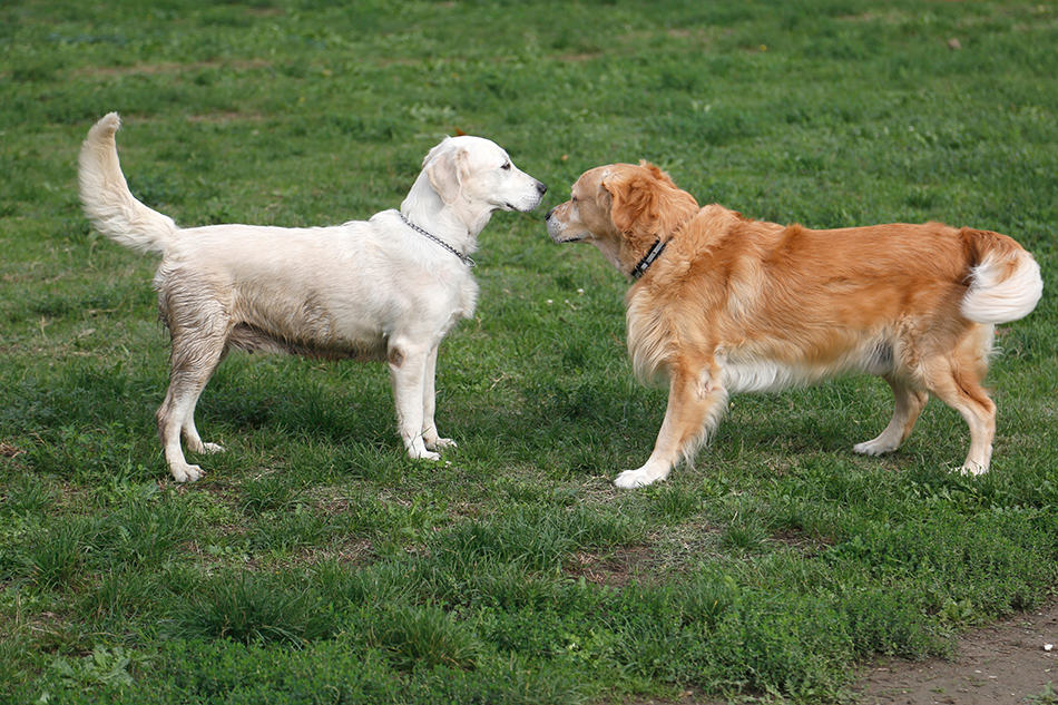 a dog interacting with other dogs