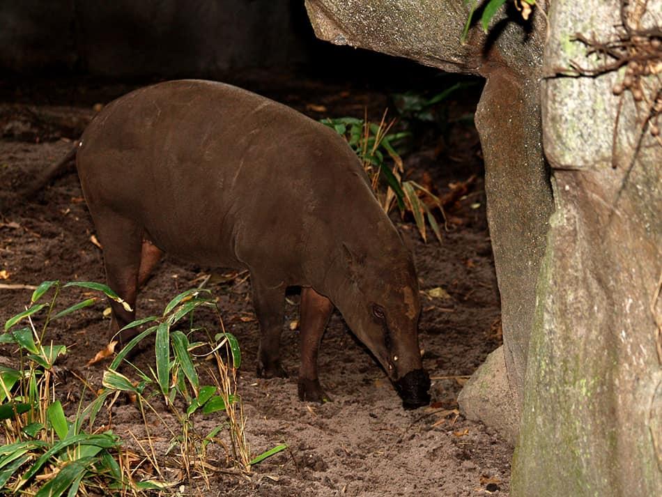 aardvark eating ants