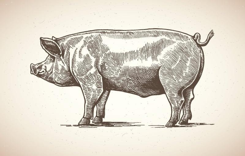 Pig Dream Symbolism