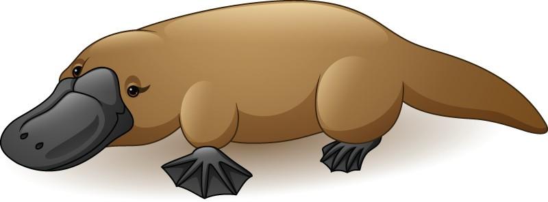 Platypus Symbolism