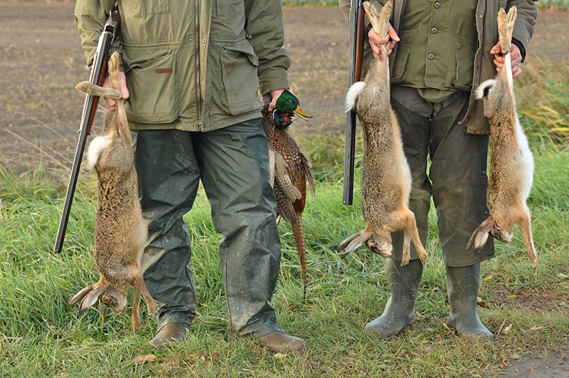 Dream of killing/hunting an animal for sport