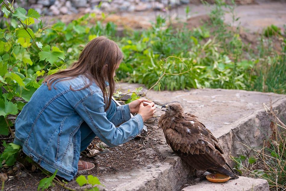 a Sick Eagle