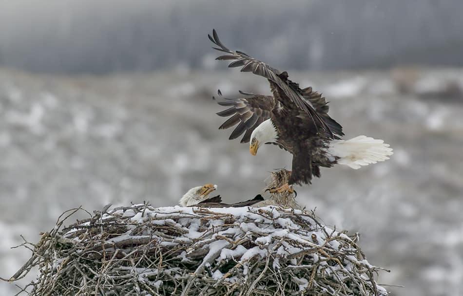 an Eagle's Nest