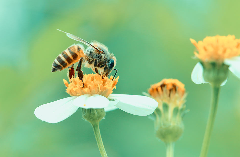 bees pollinating flowers