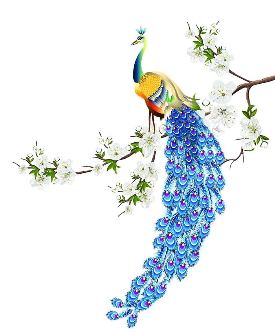 the Symbolism of Peacocks