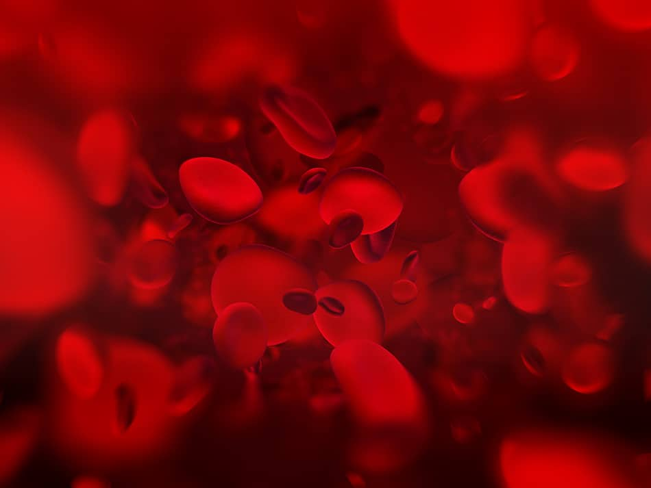 Dream of Blood