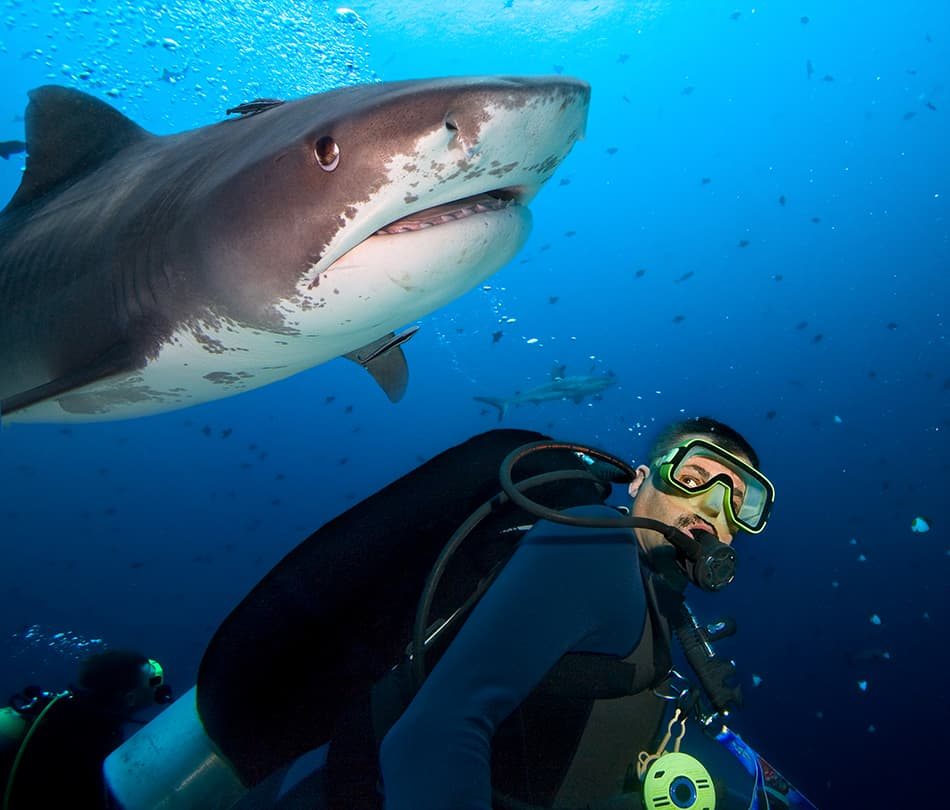 swimming with sharks in the ocean