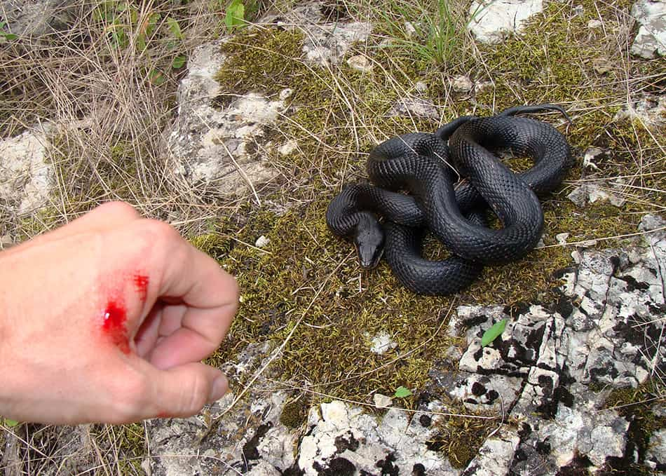 Dream of a black snake biting you