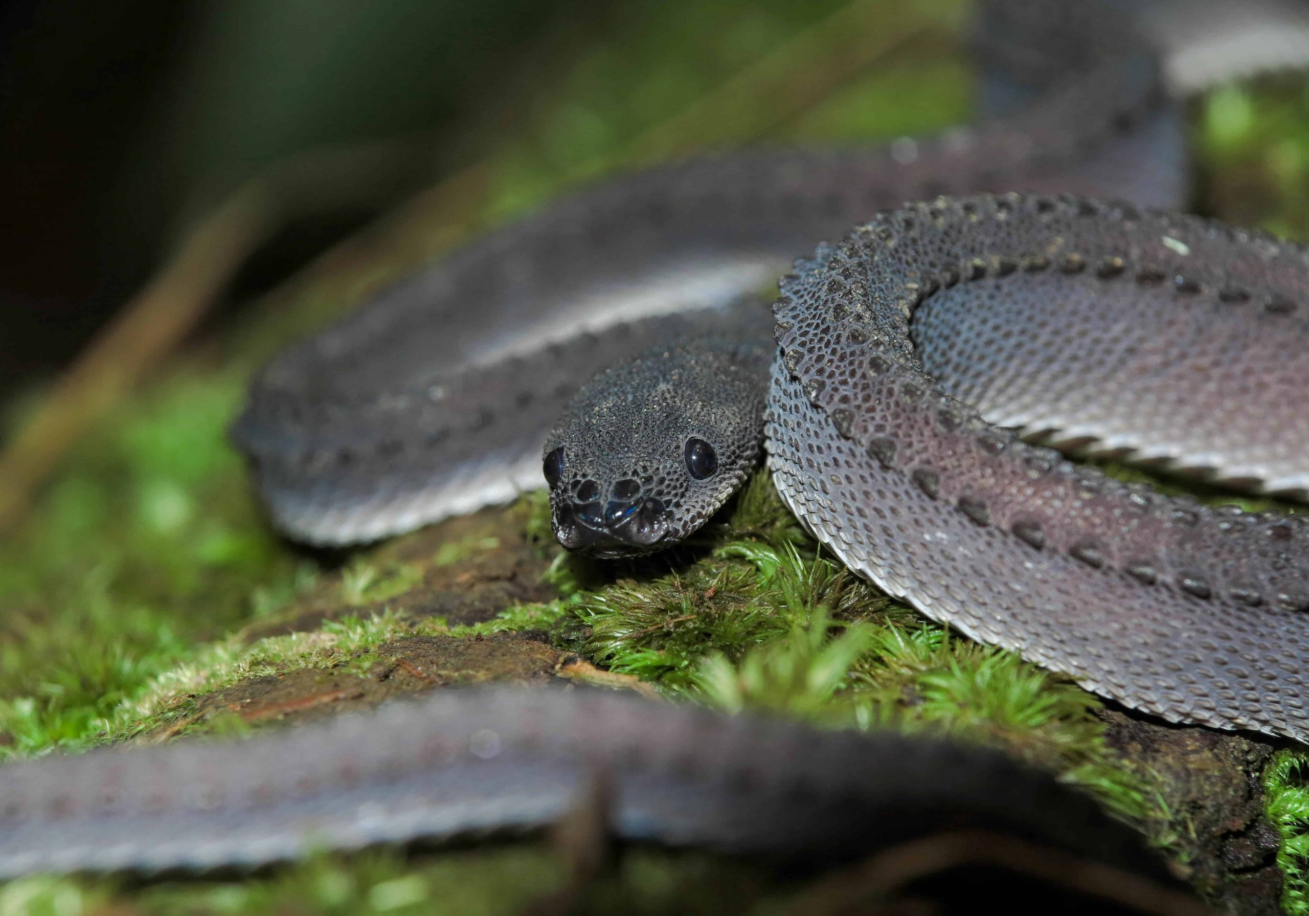 Dream of a dragon snake