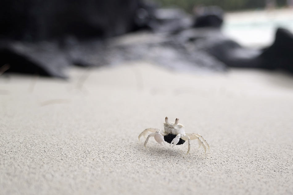 Dreaming of A White Crab