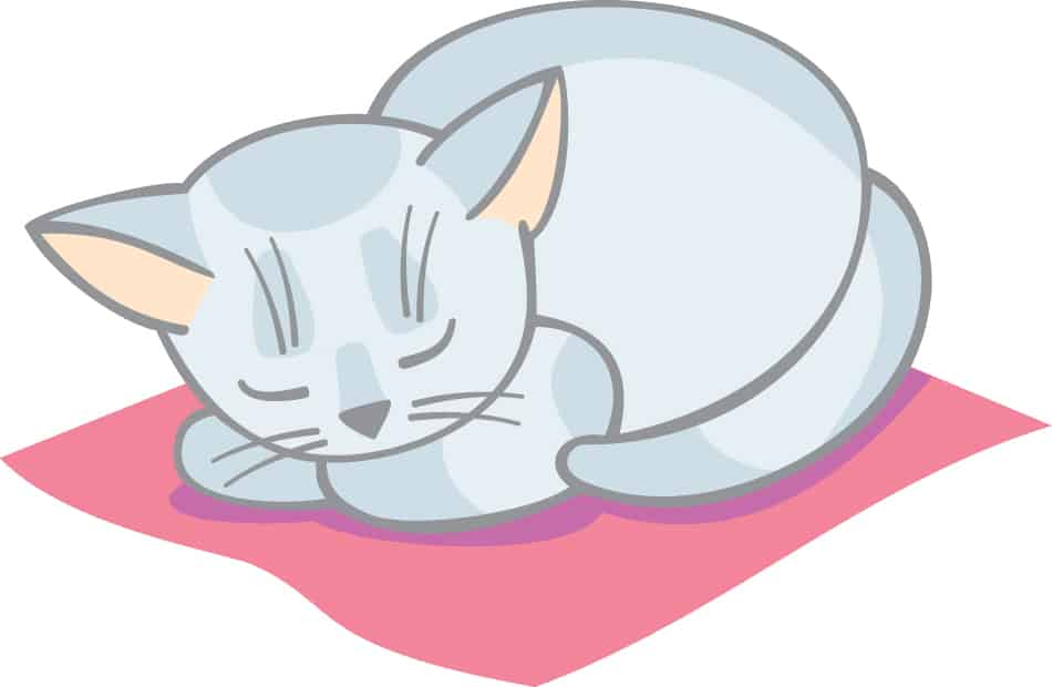 Dream of a white cat dying