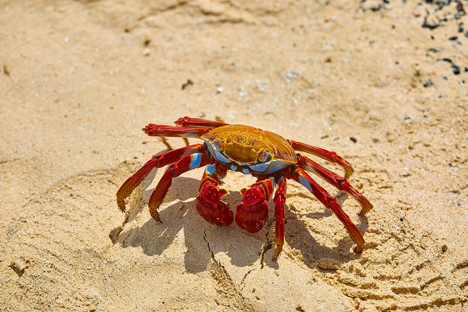 Dreams About Crab - Symbolism, Meaning and Interpretation