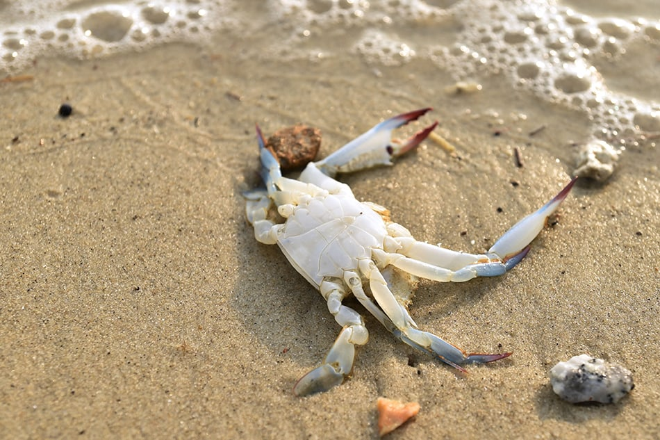 Dream About Killing A Crab
