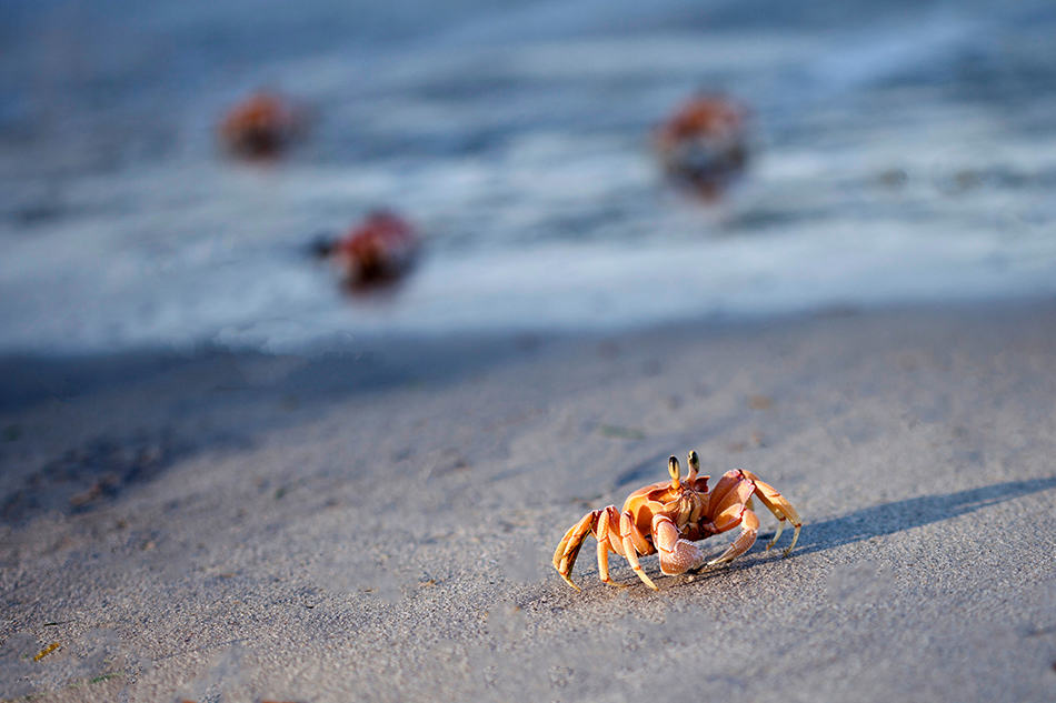 Dream About Observing Crab