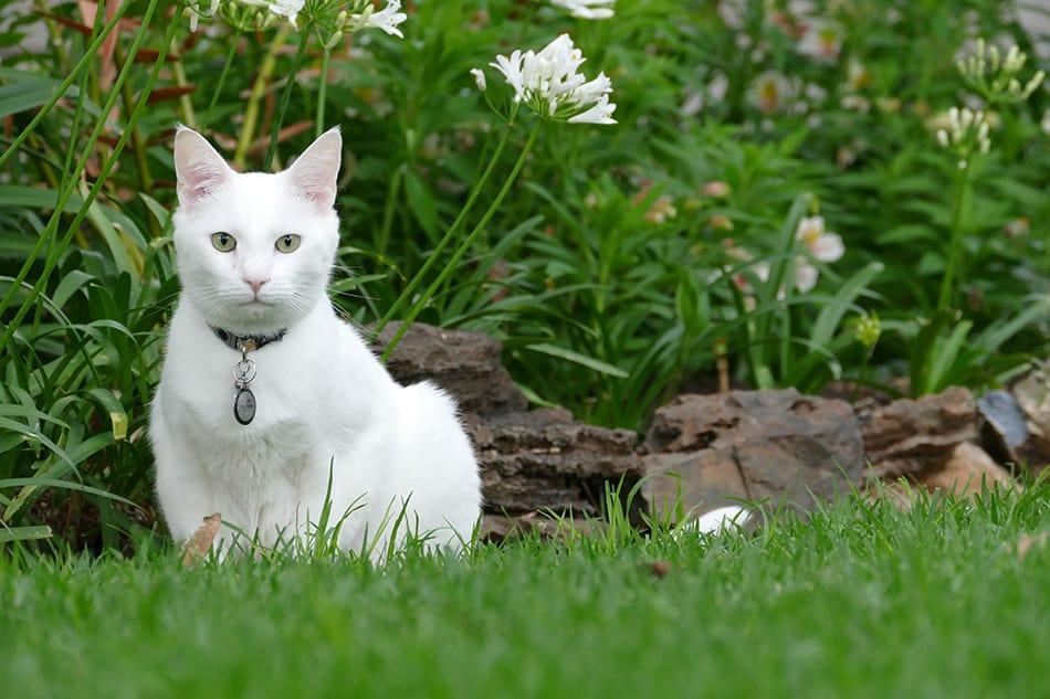 White Cat Dream Meaning & Symbolism