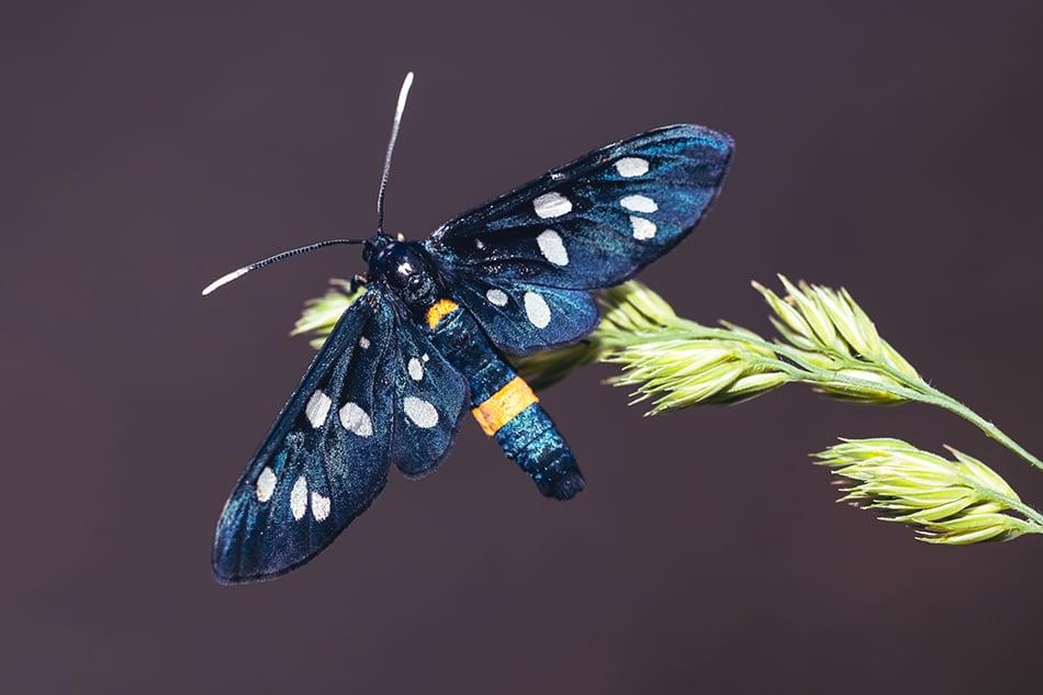 Black moth dream meaning