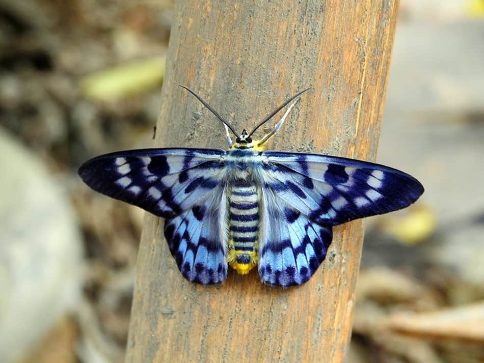 Blue moth dream meaning
