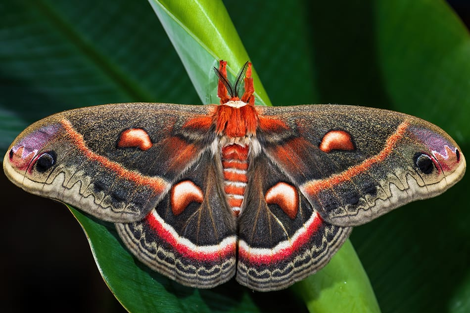 What Does It Mean to Dream of a Moth?