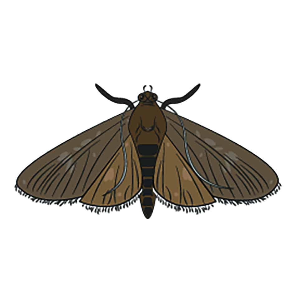 Moth Dream Symbolism