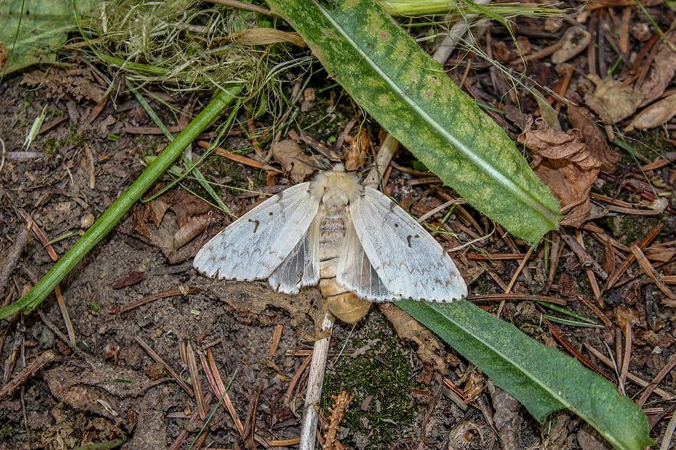 Dream of a dead moth