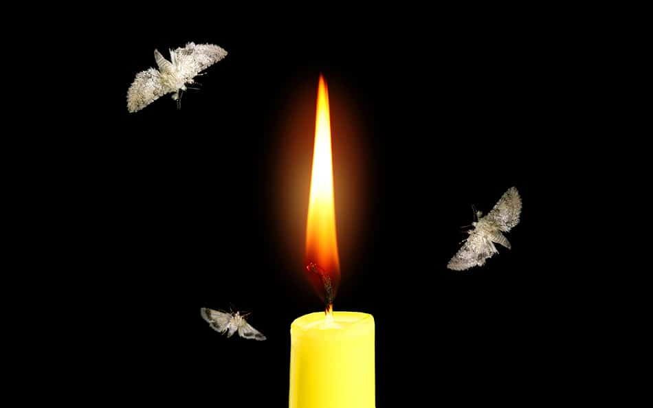 Dream of a moth being drawn to a flame