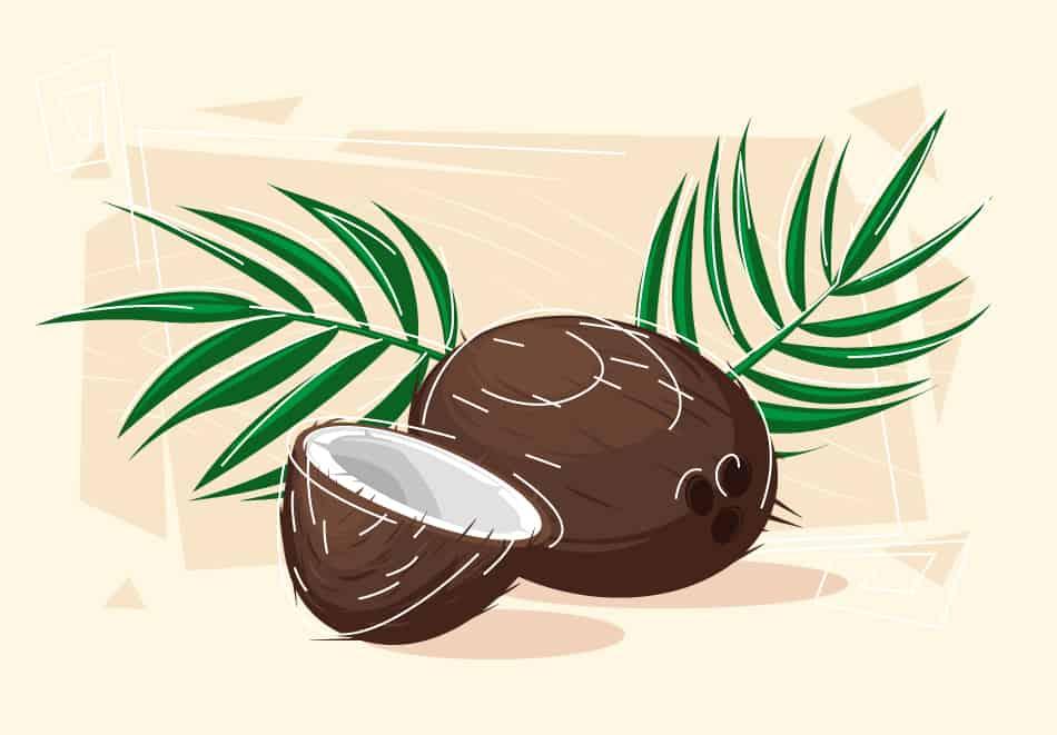 Coconut Dream Symbolism