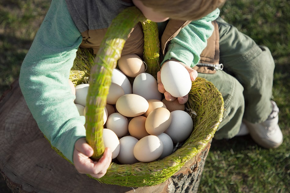Dream of collecting eggs
