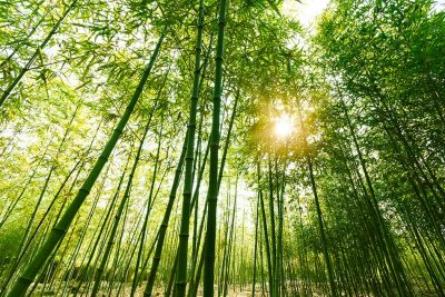 What Does It Mean to Dream of Bamboo?