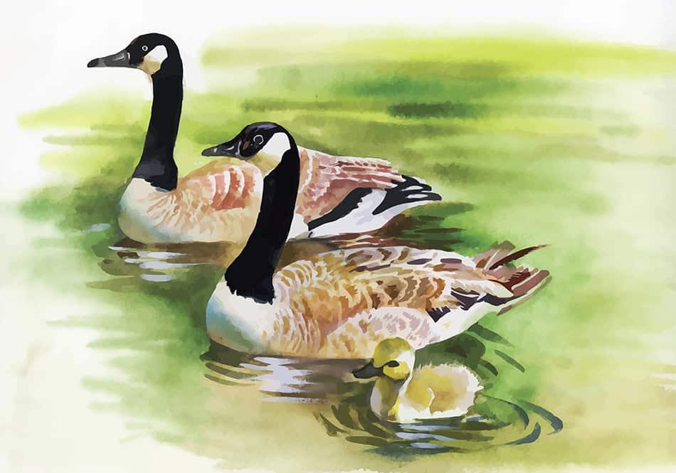 Duck Dream Symbolism