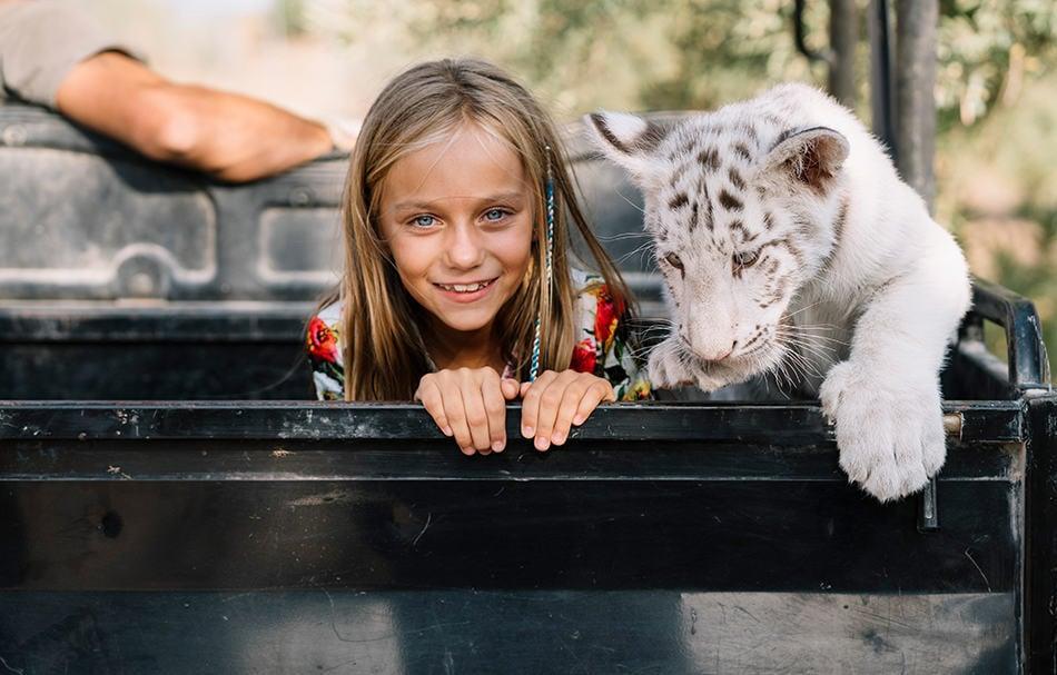 Friendly White Tiger Dream