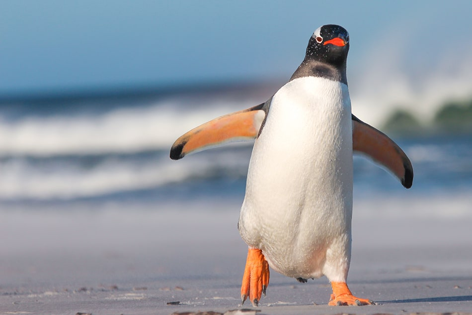 What Does It Mean to Dream of a Penguin?