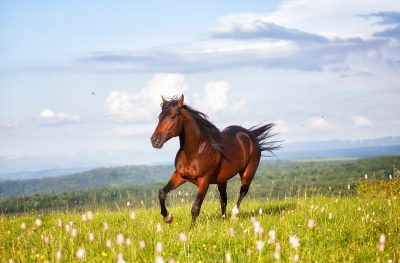 Dreaming of Brown Horse - Meaning and Symbolism