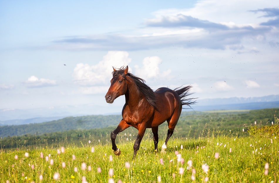 Dreaming of Brown Horse – Meaning and Symbolism